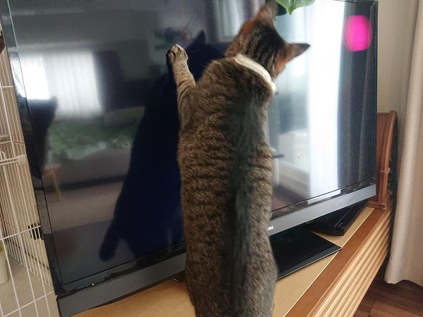 レーザーポインターと猫