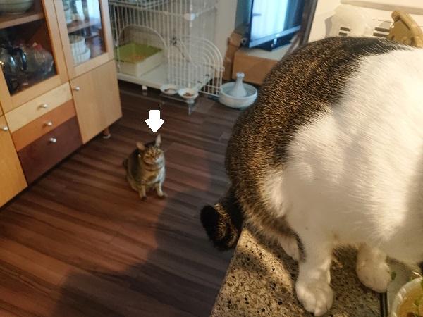 下から見つめる猫