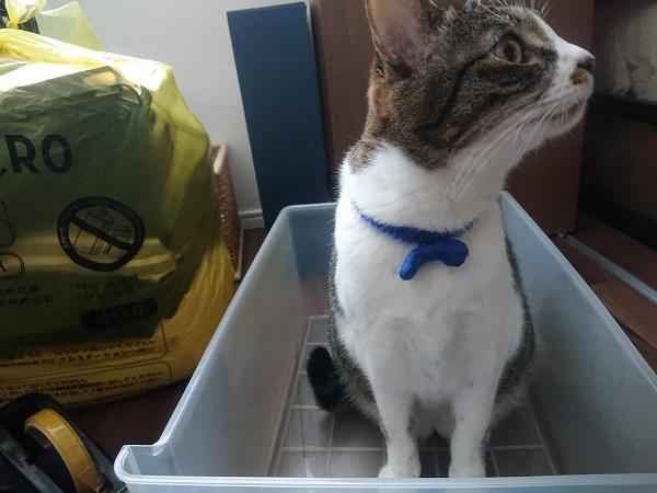 衣装ケースに入る猫