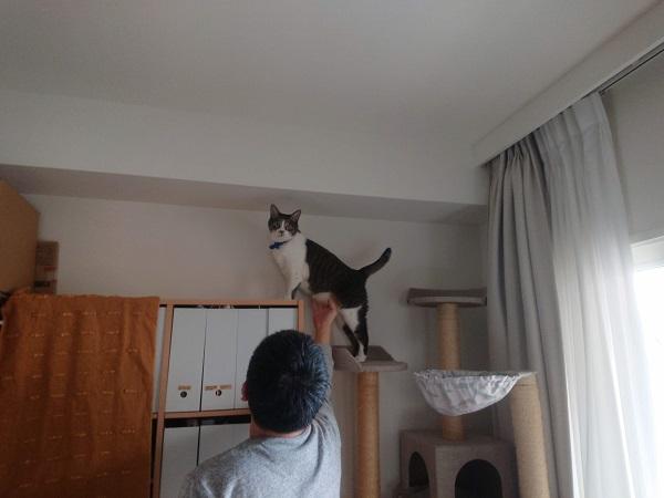 テレワークと猫