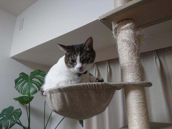 猫とテレワーク