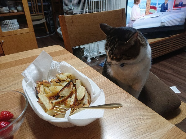 ポテトと猫
