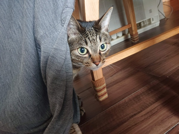 ツンデレ猫