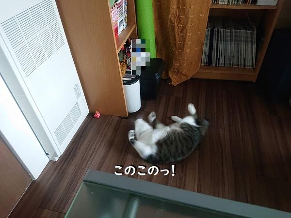 猫マキビシ