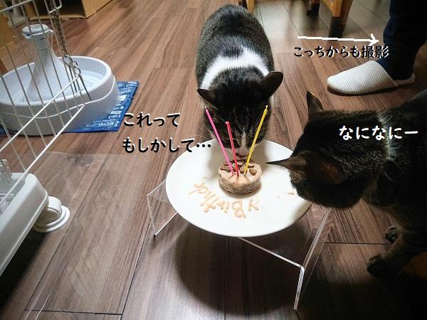 手作り猫ケーキ