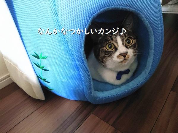 猫用クールベッドの使い方が、納得できない。の画像