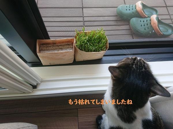 無印良品猫草