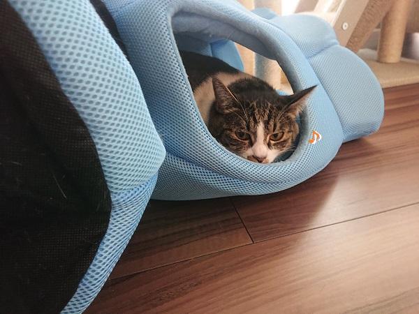 猫 クールベッド