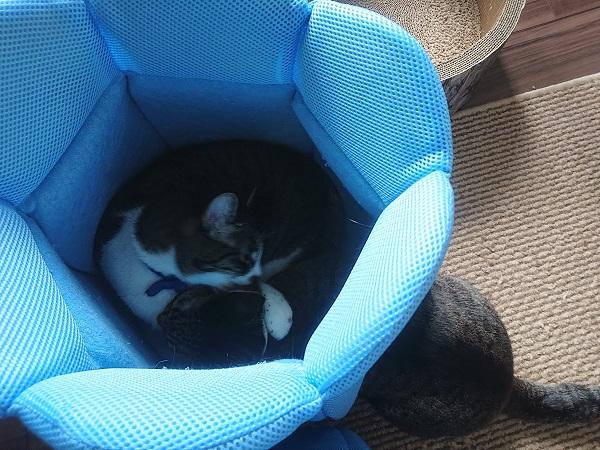 金魚鉢クールベッド