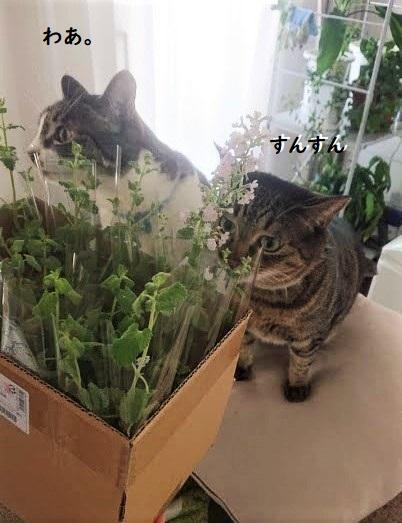 猫とハーブ