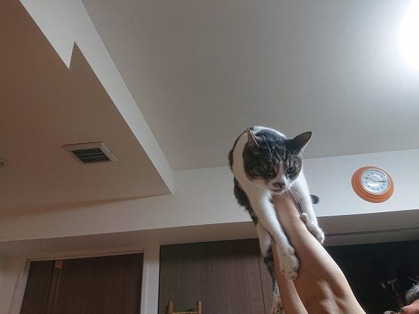高い高い猫