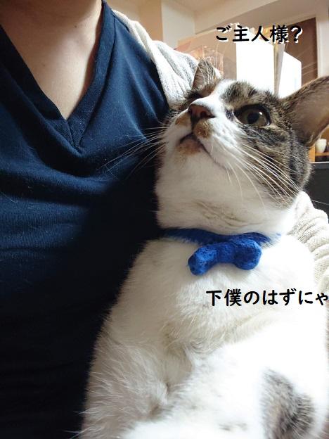 猫と自撮り