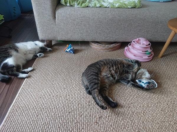 マキビシと猫