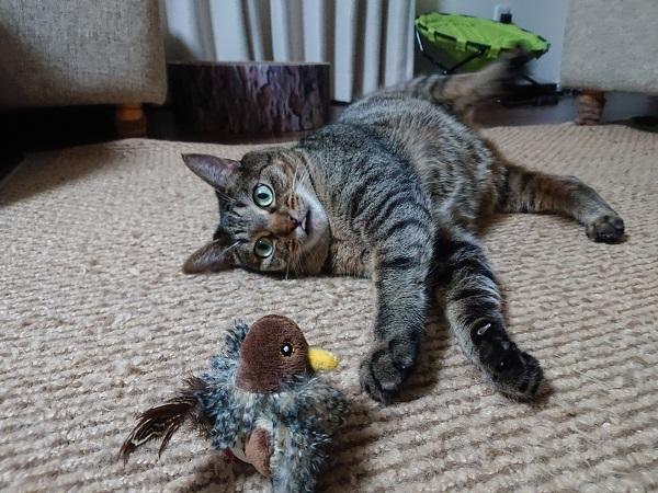 コマドリと猫