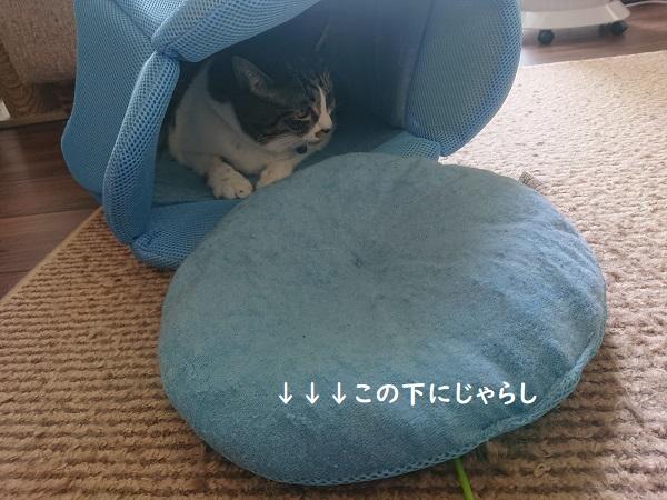 クールベッドと猫