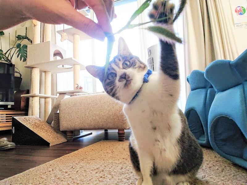 エノコロ草と猫