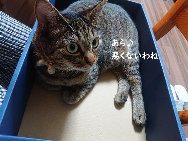 膝のリ猫レッスン
