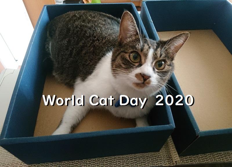 世界猫の日2020