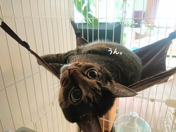 ハンモック 猫
