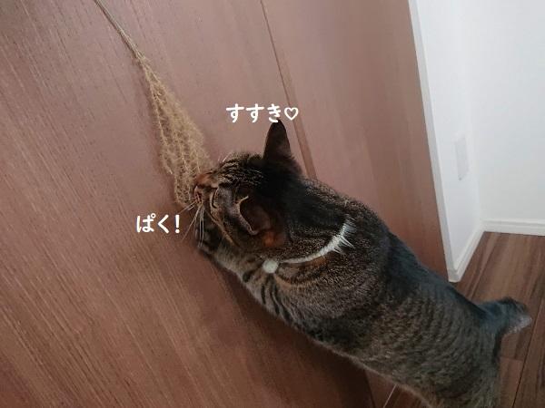 ススキと猫