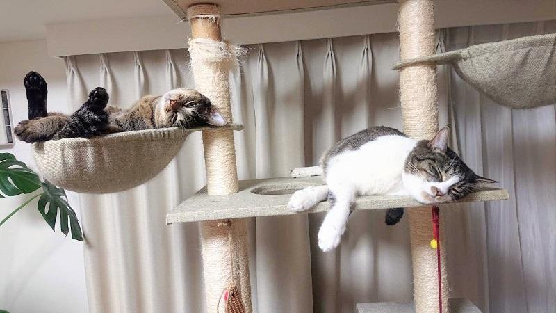 暑すぎる 猫