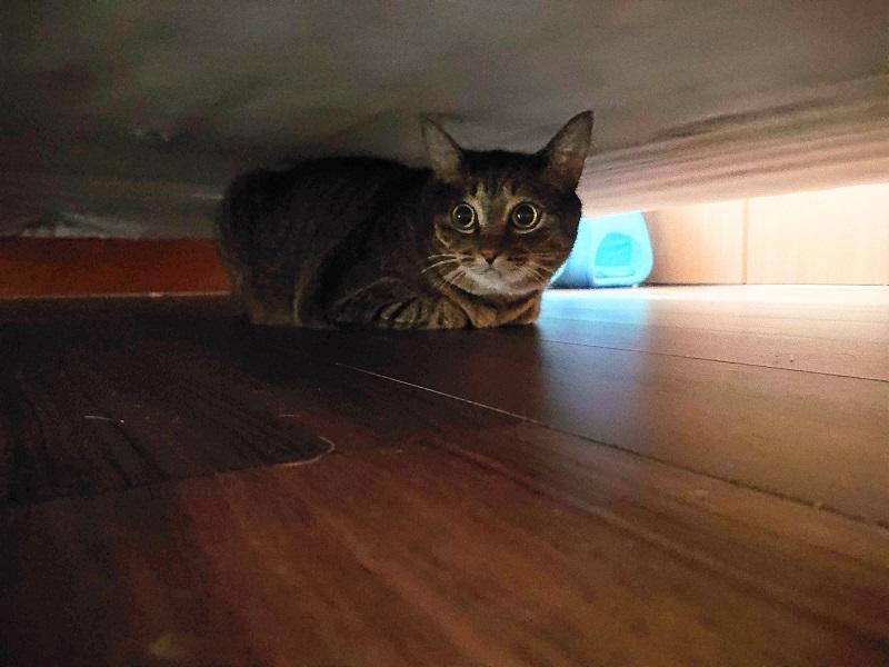 消防点検 猫