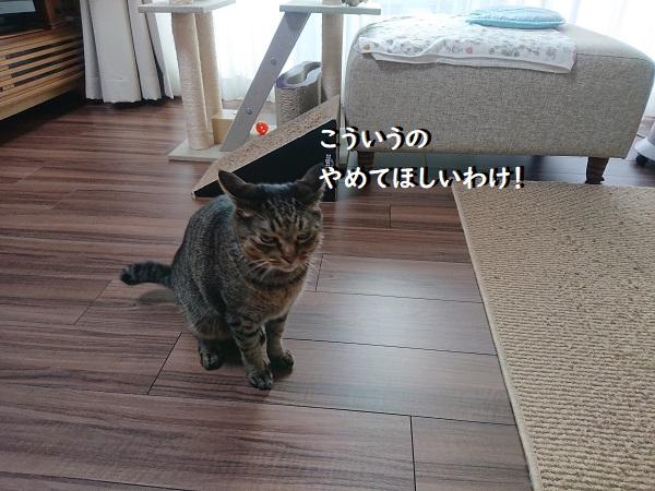 消防点検と猫