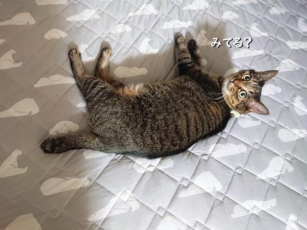わがまま猫
