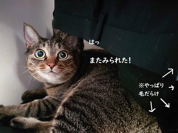 f:id:nanakama:20200914185252j:plain