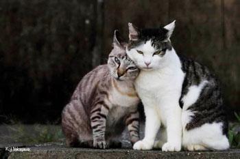 東急猫レクション