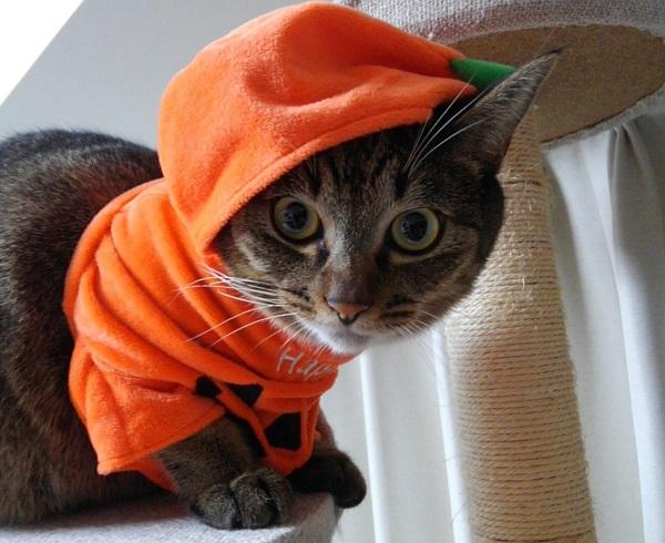 ハロウィンコスプレ猫