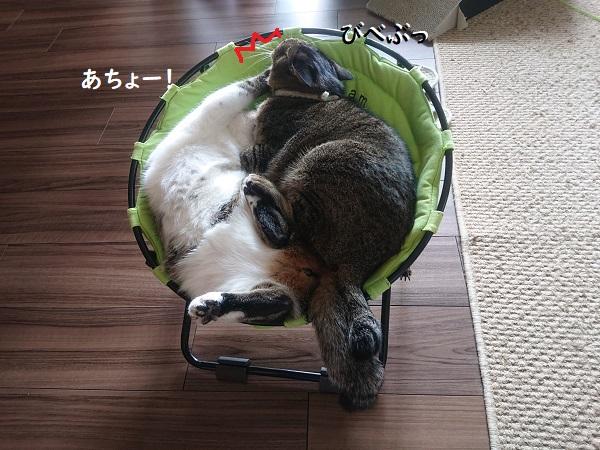ハンモックベッドと猫