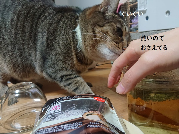 キャットニップティーと猫