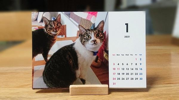 猫のカレンダー