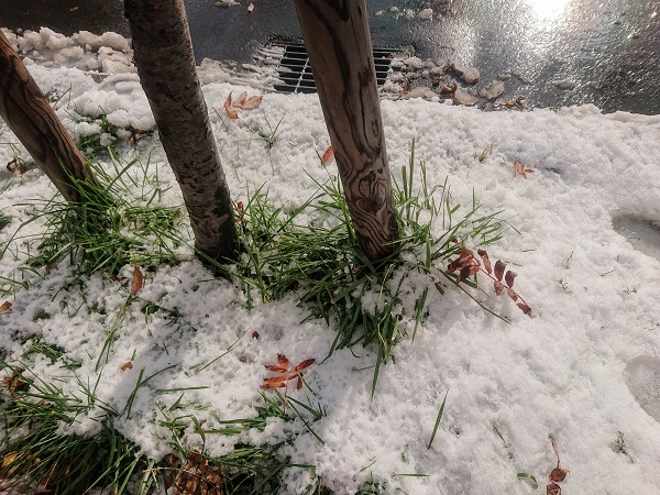 ナナカマド 雪