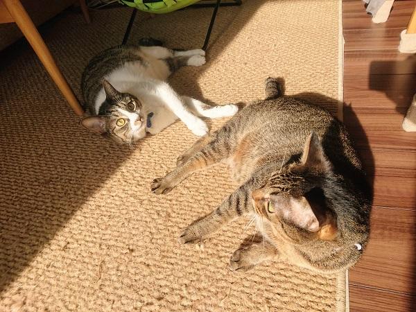 冬の陽だまりと猫