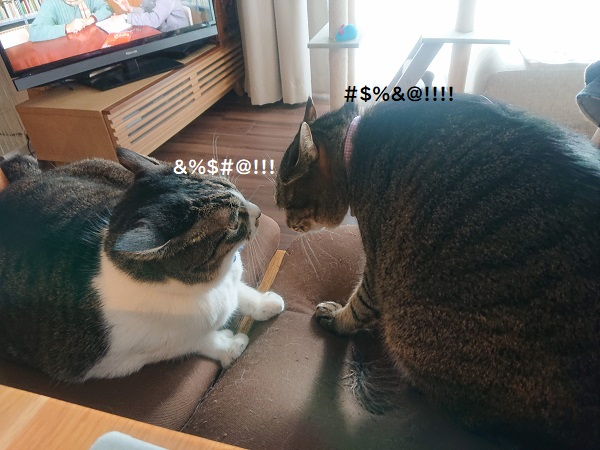猫の小競合い