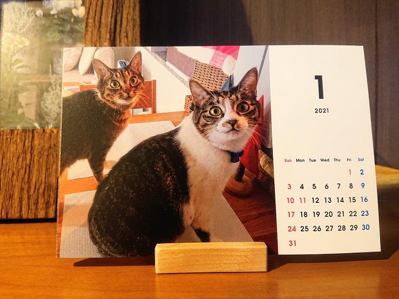 北のねこ暮らし カレンダー