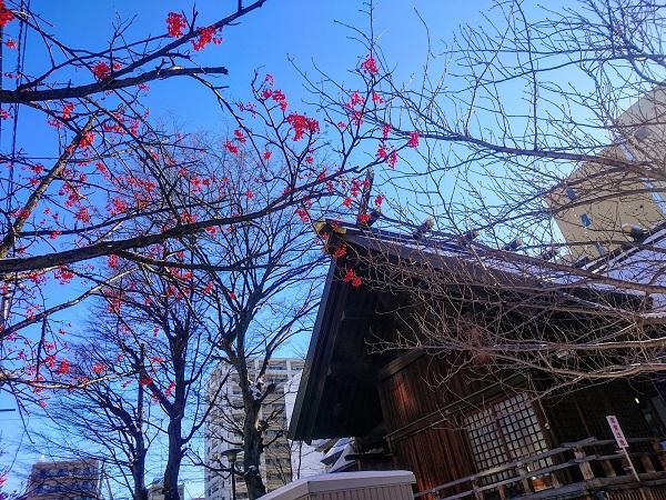 ナナカマド 神社