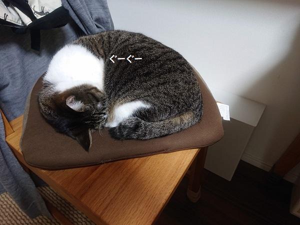 骨盤クッション 猫
