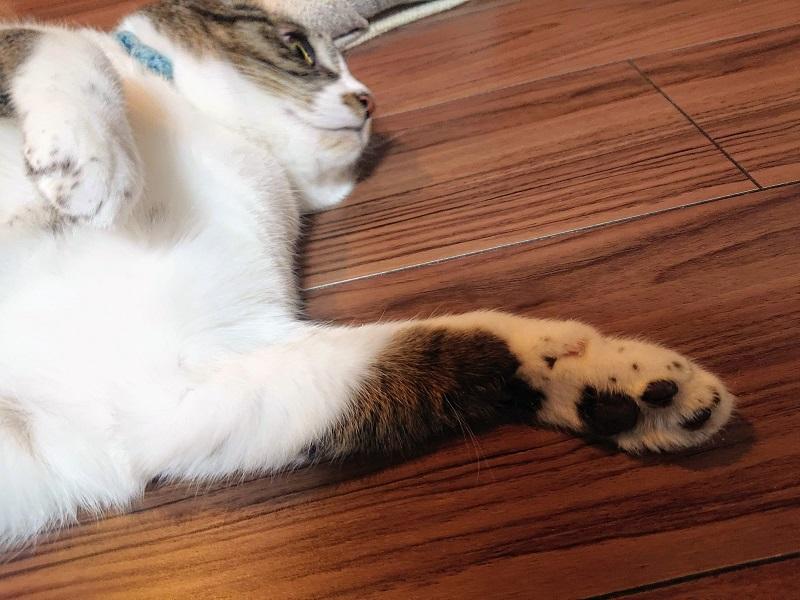 猫 足 触毛