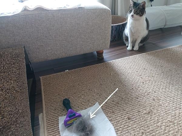 猫 ブラッシング