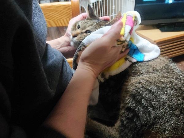猫 蒸しタオル
