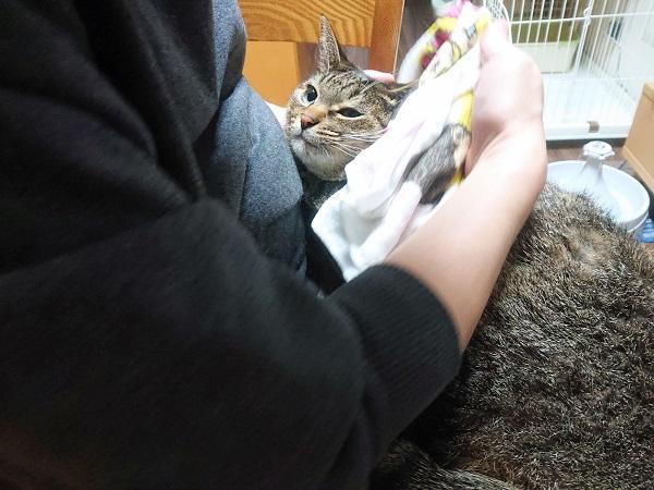 蒸しタオル 猫