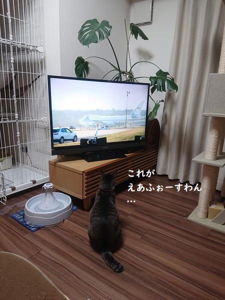 テレビと猫