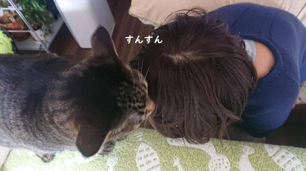 においチェック 猫