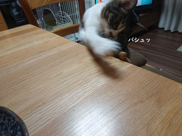 落花生 猫