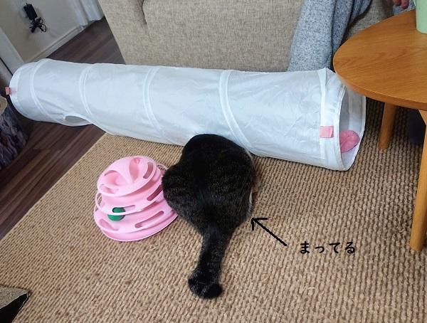 トンネル 猫