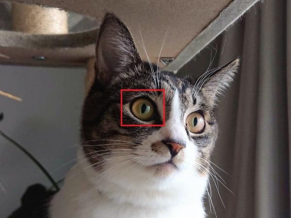 猫瞳AFイメージ