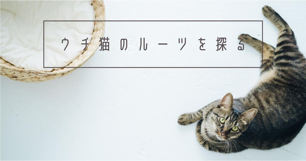 f:id:nanakama:20210220120528p:plain